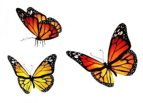 Remplacer les insecticides par des œufs de papillons | EntomoNews | Scoop.it