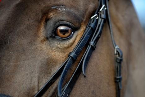 Horses Can Read Human Facial Expressions | Food for Pets | Scoop.it