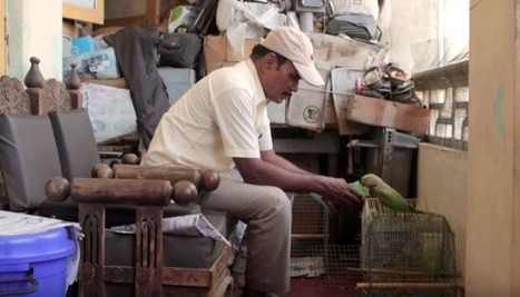 Over 2,000 Parrots Visit This Mechanic Every Day | This Gives Me Hope | Scoop.it