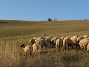 Ovce bez pastiera | Viera | Scoop.it
