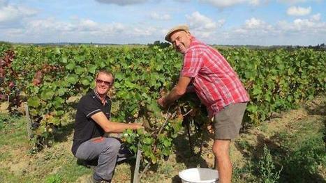 Le Berligou, un vin de roi, renaît dans le sud Loire | Le vin quotidien | Scoop.it
