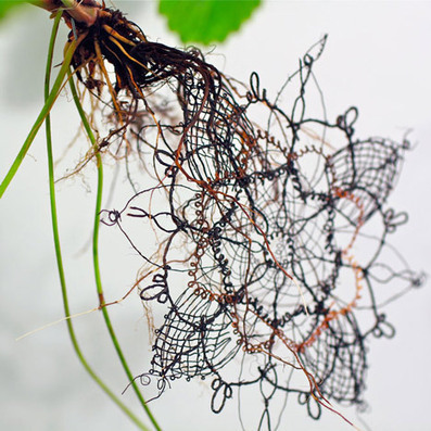 Genetically-engineered plants by Carole Collet produce food and lace | Electro-Horticulture | Scoop.it