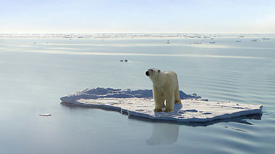 Polar bears hit by twin threats of pollution and climate change | Sustain Our Earth | Scoop.it