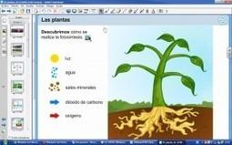plantas1-300x187.jpg (300x187 pixels) | La fotosintesis | Scoop.it