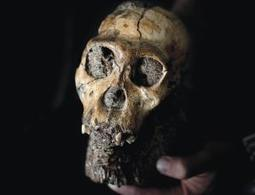 Human 'missing link' fossils may be jumble of species | New Scientist | À la une | Scoop.it