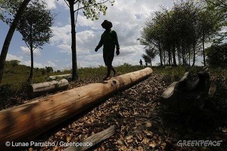 Greenpeace Brasil: O sangue indígena corre solto no Maranhão.   TecnologoDS Magazine   Scoop.it