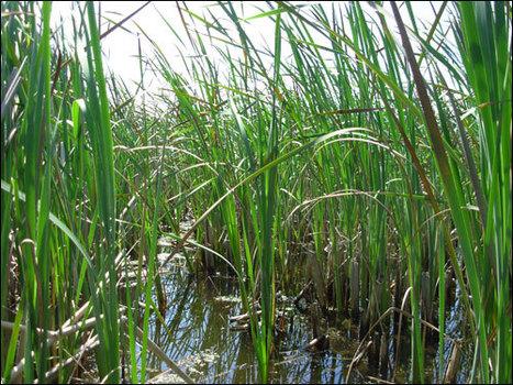 Rencontres « Préservation des zones humides, de la continuité écologique et de la biodiversité » | Centre de ressources Trame verte et bleue | Environnement et développement durable, mode de vie soutenable | Scoop.it