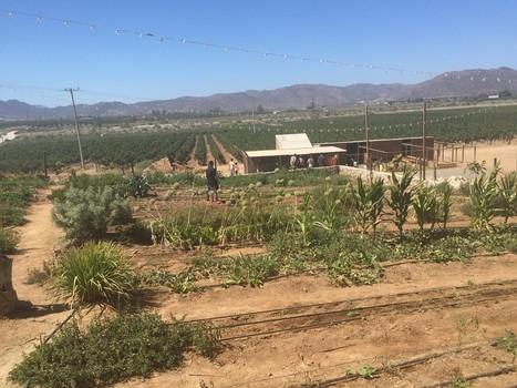 The 15 Best Things to Do in Baja California This Summer | Baja California | Scoop.it