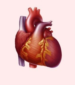 Living With Enlarged Heart? Then You Should Know These Things | Blood Disorders | Scoop.it