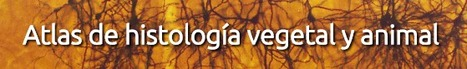 (ES) - Atlas de Histología Vegetal y Animal | uvigo.es | Biblioteca CCBA | Scoop.it