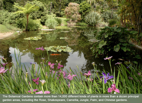 The Huntington Gardens: Grounding in Botany Lesson Plans | negocios en linea | Scoop.it