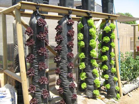 Cultivo hidropónico vertical en bolsas o mangas de plástico | Cultivos Hidropónicos | Scoop.it