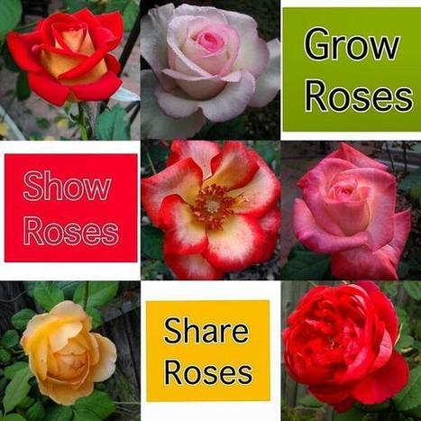 Tweet from @RedneckRosarian | All Things Rose | Scoop.it