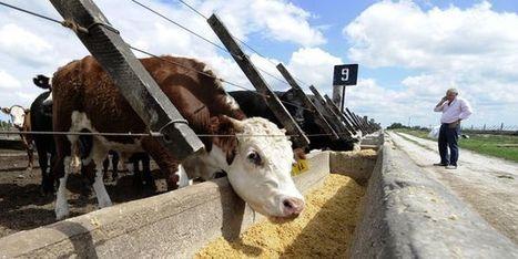 Avant d'être cancérigène, la viande est polluante pour la planète | Toxique, soyons vigilant ! | Scoop.it