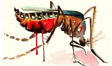 Zika: grand risque et petites manipulations politiciennes... | Indian Ocean 7 Lames la Mer | Scoop.it