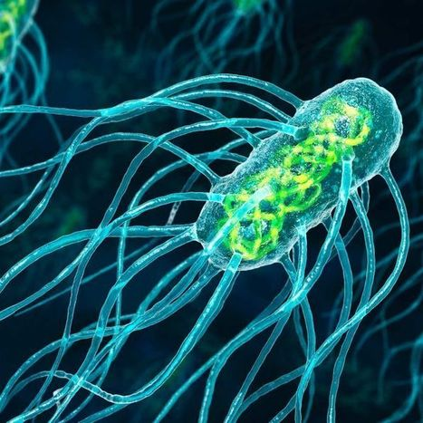 The microscopic high-tech wizardry of #bacteria #knowledge #education | Limitless learning Universe | Scoop.it