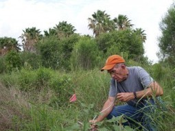 UT Austin Establishes Texas Invasive Species Program with $2.7 ... | Invasive Species | Scoop.it