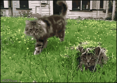 April Fools' Day Animal GIFs To Make You Laugh | Animals R Us | Scoop.it