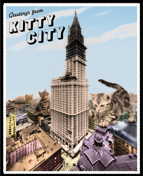 Kitty City | Flux Factory | NYC's Animals | Scoop.it