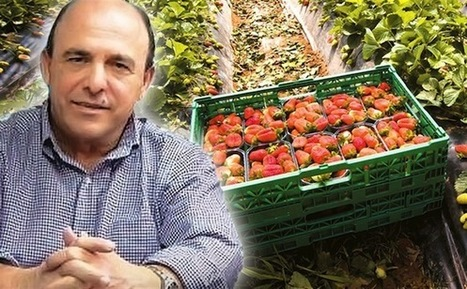 Vangelatos Says No Blood On His Strawberries - Greek Reporter | Another use for one trip pallets | Scoop.it