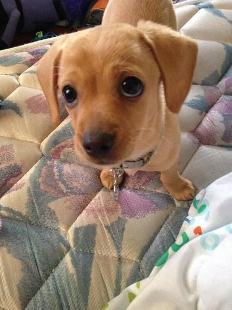 Tweet from @BabyAnimalPics   The Puppy Places   Scoop.it