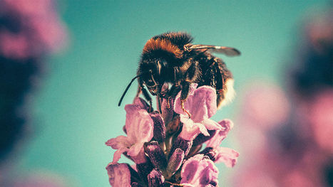 Yes, The Honeybee Is Still In Trouble | Farming, Forests, Water, Fishing and Environment | Scoop.it