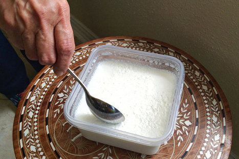 The 'Immortal' Homemade Yogurt That Traveled 'Round The World | Media Cultures: Microbiology in the news | Scoop.it