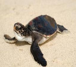 April is Sea Turtle Awareness Month   Inside Conservation Blog   From Fashion To Nature...And Back!   Scoop.it