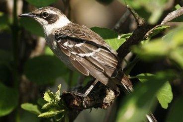 Des sites essentiels à la survie des oiseaux - LaPresse.ca | Nature & Civilization | Scoop.it