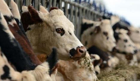 Climat: plus d'herbe pour les vaches, moins de méthane dans l'air | Pour une agriculture et une alimentation respectueuses des hommes et de l'environnement | Scoop.it