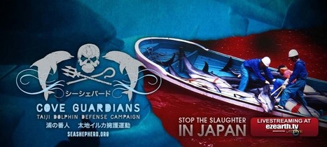 #SeaShepherd Conservation Society ~ #Reefdefence #Taiji & more... pls sign petition below...+ | Rescue our Ocean's & it's species from Man's Pollution! | Scoop.it