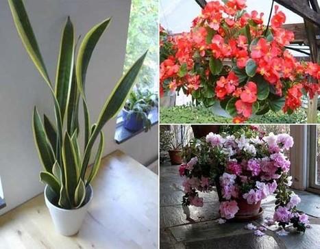 12 plantas de interior que purifican el aire de for Plantas de interior limpian aire