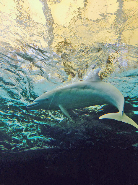 Blog: An Angel in Hell | Ric O'Barry's Dolphin Project | All about water, the oceans, environmental issues | Scoop.it