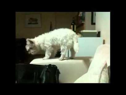 Dumb Cats | Internet Marketing | Scoop.it