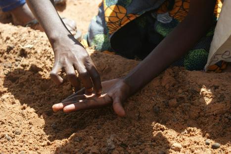C'est le moment de la récolte! | Fondation Sylla Caap | Scoop.it