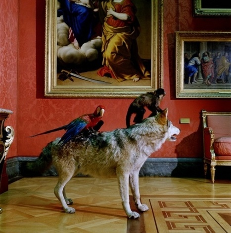 Animals Photography by Karen Knorr / Animal Photography / Photography Hubs and Blogs | Photography Blog | Scoop.it