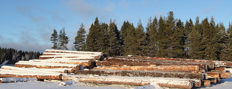 Russia looking to double lease terms of forest areas to attract investors | Timberland Investment | Scoop.it