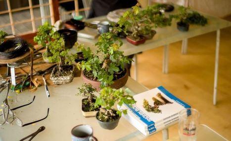 Shohin and bonsai exhibition 3 at The Japanese Gardens | Shohin ... | Japanese Gardens | Scoop.it