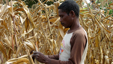 Agriculture and food security | Food Security | Scoop.it