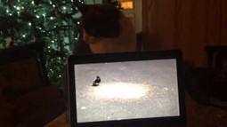Funny cat chasing birds | Crazy Joke | Scoop.it