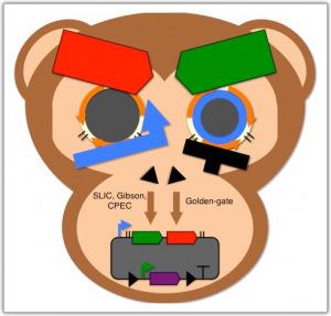 Biomechanism.com » DNA construction software saves time, resources ...   Genomique   Scoop.it