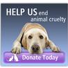 Animal Cruelty Project