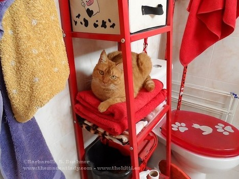 Ruby blending in with the bathroom furniture | The Mad Cat Lady | The Funniest Cats In The World! | Scoop.it