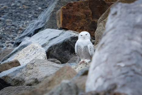 Wildlife and Landscape Photography with the Fuji X-E2 | Marc Sadowski | harshitha | Scoop.it