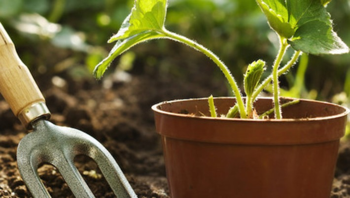 10 essential apps for gardeners | Garden apps for mobile devices | Scoop.it