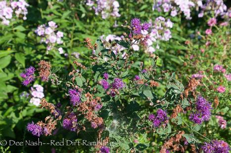 August Garden Observations - Red Dirt Ramblings®   Annie Haven   Haven Brand   Scoop.it