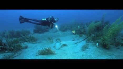 Vidéo Full HD | Antilles - Voyage plongée à Saint-Eustache ! | Plongeurs.TV | Scoop.it