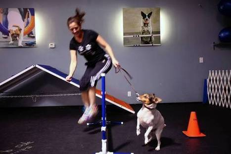 Dog as workout partner | Dental Insurance | Scoop.it