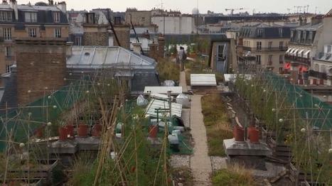 [Vidéo] L'agriculture urbaine, c'est possible ! | Les colocs du jardin | Scoop.it