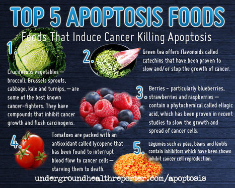 How to Fight Cancer with Food-Induced Apoptosis : Underground Health Reporter | Living A Healthy Active Lifestyle | Scoop.it